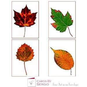 Autumn Leaves Fine Art Photography Greeting Note Cards